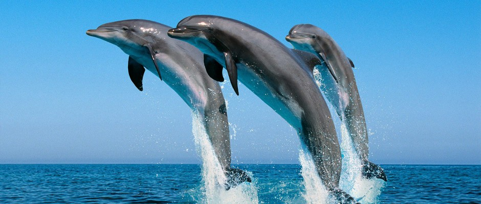 Y Flying Dolphins Spur Travel Palawan